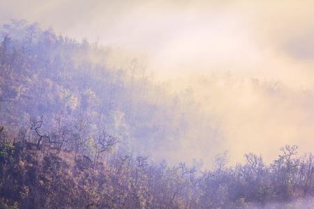 jailbreak: Mountain landscape with summer morning fog at sunrise