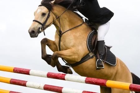 salto de valla: caballo con saltando sobre las barras de la valla en las carreras, detalle Foto de archivo