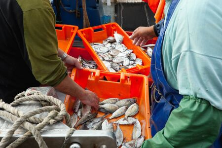 days catch of sardines in orange crate sitting on a dock which was caught in Portugal photo