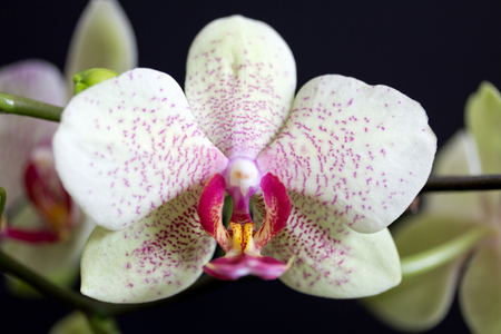 A orchid in our room.
