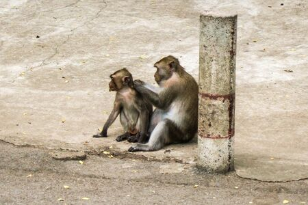 Interaction of mother and baby monkeys photo