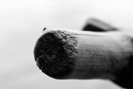 oar: Spider on an old oar