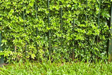 bush fence Stock Photo - 8056092