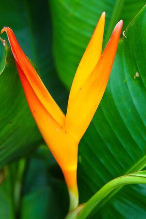 bird of paradise: Flower Bird Paradise Stock Photo