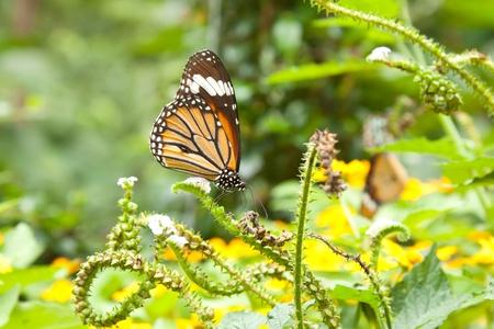 buterfly in the garden