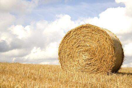 hay field: Hay roll harvest landscape
