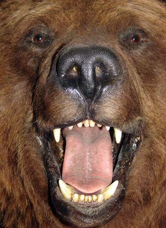 close up portrait of a bear