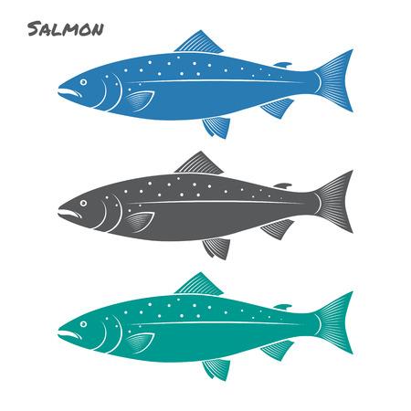 spawning: Salmon fish illustration on white background Illustration