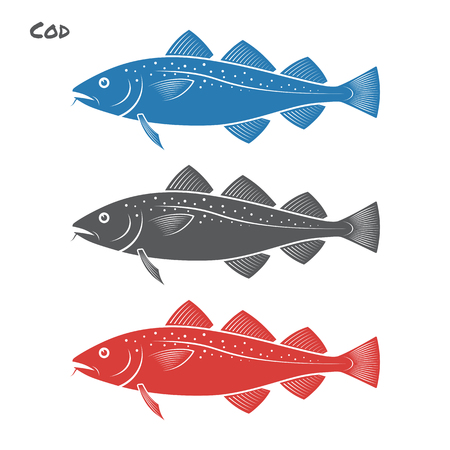 Cod fish illustration on white background