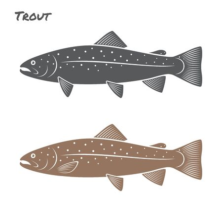 brown trout: Trout fish illustration on white background