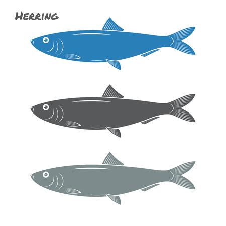 herring: Herring fish illustration on white background
