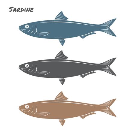 Sardina pesce illustrazione vettoriale su sfondo bianco