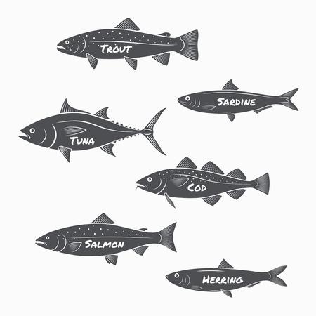 truchas: Conjunto de siluetas de peces en el fondo blanco. Trucha, sardinas, atún, bacalao, salmón y arenque etiquetas. Vectores
