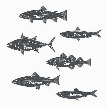 tuna: Set of fish silhouettes on white background. Trout, sardine, tuna, cod, salmon and herring labels.