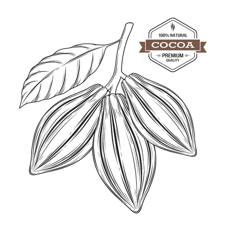 Cocoa pods vector illustration. Cocoa label, logo, emblem, symbol. 矢量图像