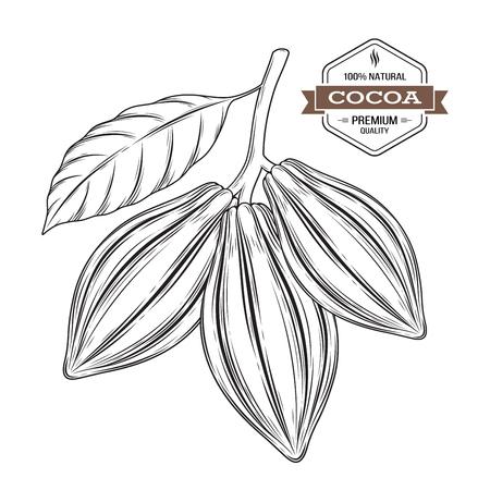 Cocoa pods vector illustration. Cocoa label, logo, emblem, symbol. Ilustração
