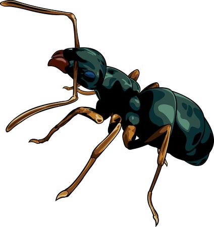 Vector cartoon black ant worker on white background Illustration