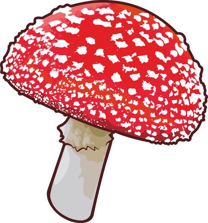Detailed vector art with amanita mushroom on white background Illustration