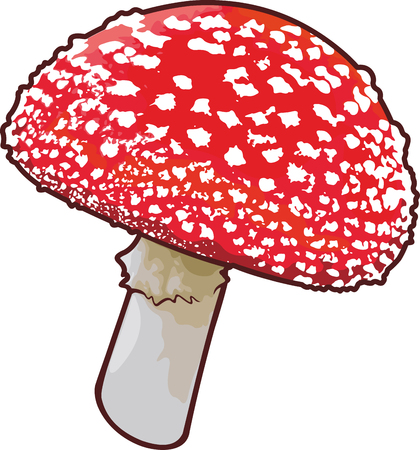 Detailed vector art with amanita mushroom on white background Illustration
