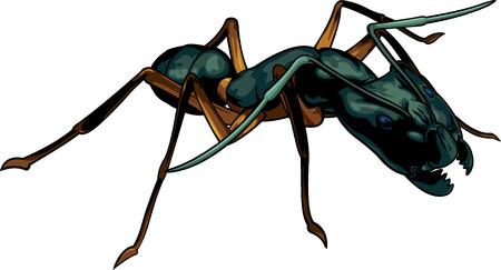 Vector cartoon black ant warrior on white background Illustration