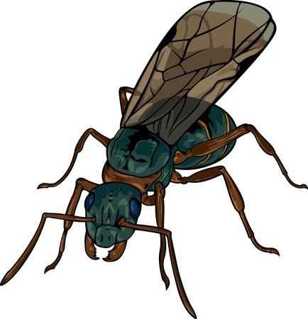 Cartoon black winged ant on white illustration.