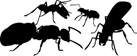 Four black silhouettes of ants on white background Vettoriali