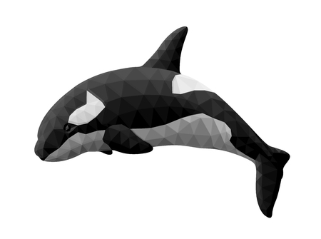 Low poly illustration with beautiful orca on white background Иллюстрация