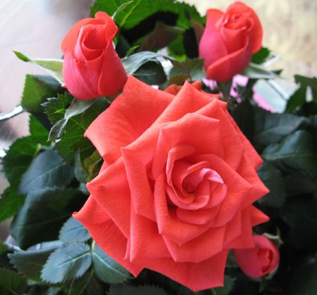 four pink roses Stock Photo - 883087