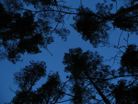 round dance of trees in the forest