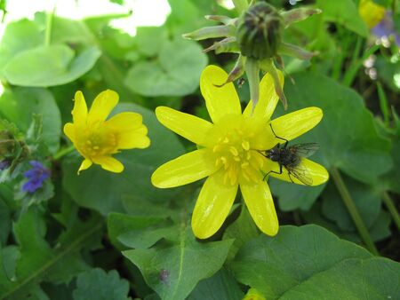 two yellow flowers and a small insect