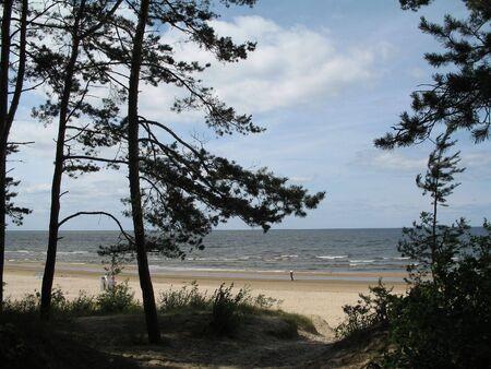 tall pines near the sea Stock Photo