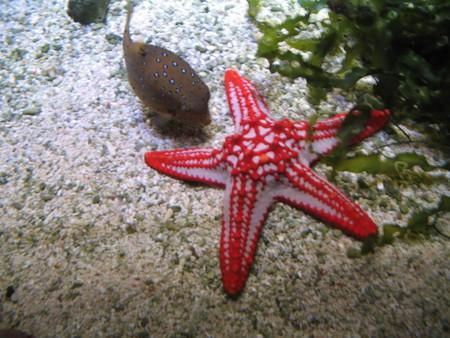 a starfish Stock Photo