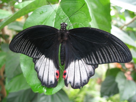 a butterfly spreading the wings photo