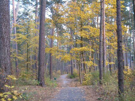 nature in autumn