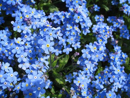 photo of flower-bed Stock Photo - 3042909
