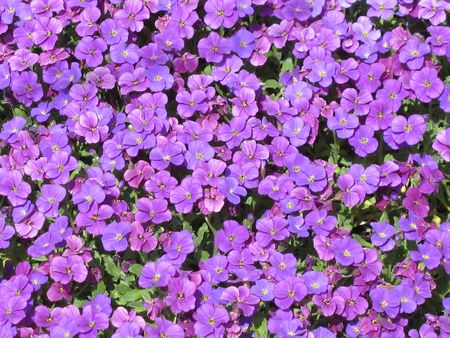 photo of flower-bed Stock Photo - 3042911