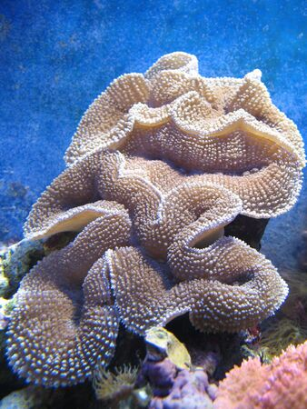 corals in underwater world Stock Photo