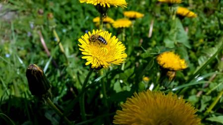 bee on flower: bee on yellow flower Stock Photo