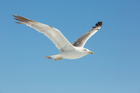 the seagull themes
