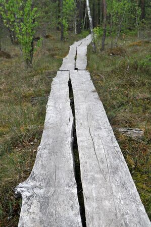 It is a track in the forest. Stock Photo - 5104837