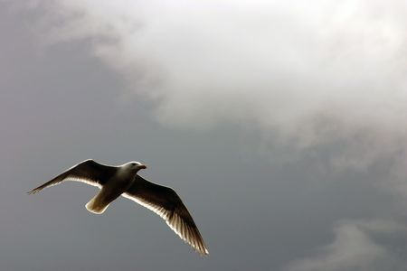 A Cloud and a flying seagull in Seattle, near Shilshole beach Imagens