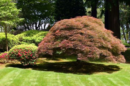 professionally: Professionally landscaped trees and lawn in Portland arboretum in Oregon