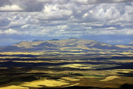 Autumn hills of Palouse, view from an overlook on a cloudy Autumn day