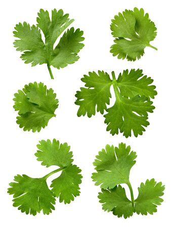 кинза: Parsley (Cilantro)