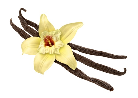 Vanilla Bean and Flower isolated Stock Photo - 10368465