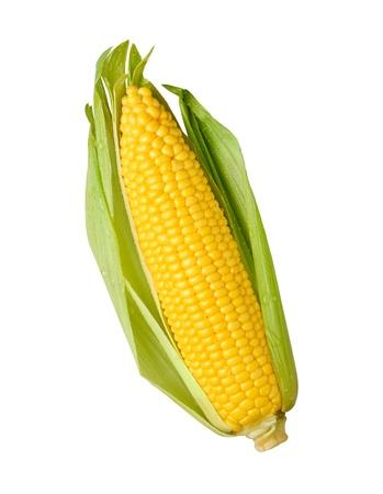 espiga de trigo: Espiga de maíz aislado en un fondo blanco