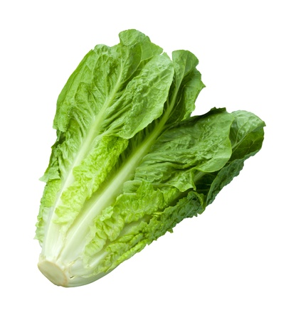 romaine: Romain Lettuce isolated on a white background