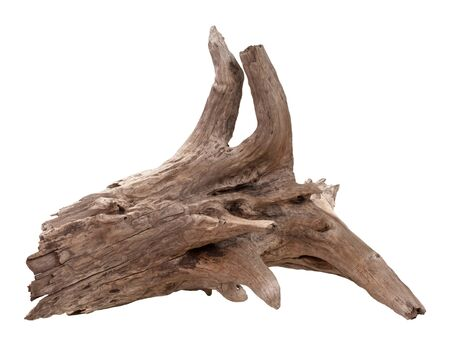 driftwood: Old Driftwood Isolated on a white background