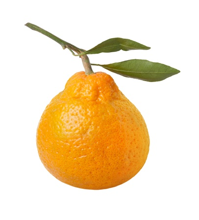 Satsuma Orange Isolated with clipping path on a white background Stock Photo - 16834155