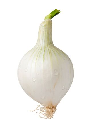 Knob Onion Isolated with clipping path on a white background Stock Photo - 17514811